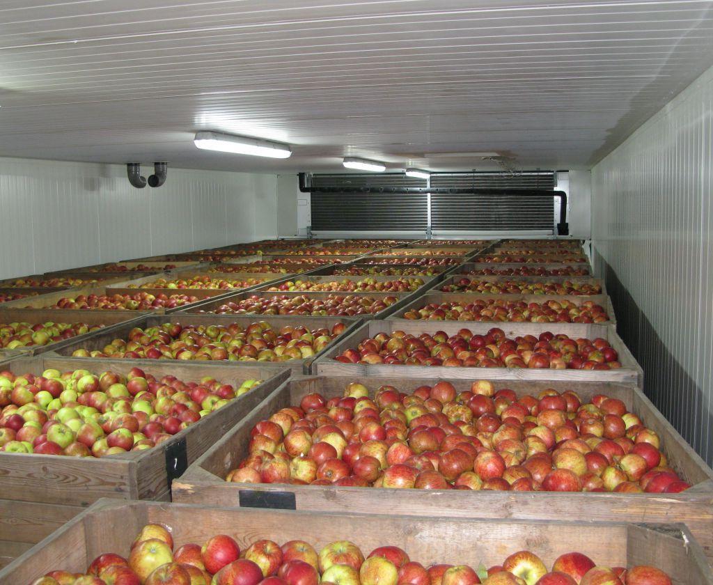 Картинки по запросу холодильная камера для овощей и фруктов